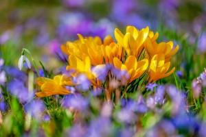 Popraw sobie nastrój na wiosnę