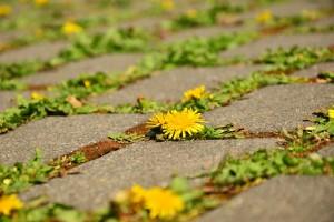 Asertywność – klucz do szczęścia i sukcesu