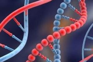 Uniwersytet Łódzki tworzy pracownię genetyczną i bank DNA