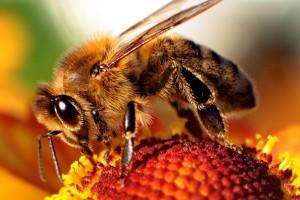 Uczelnia Techniczno-Handlowa domem dla pszczół