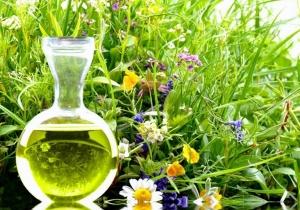Uniwersytet Przyrodniczy w Lublinie (UP) - kierunek zielarstwo i terapie roślinne