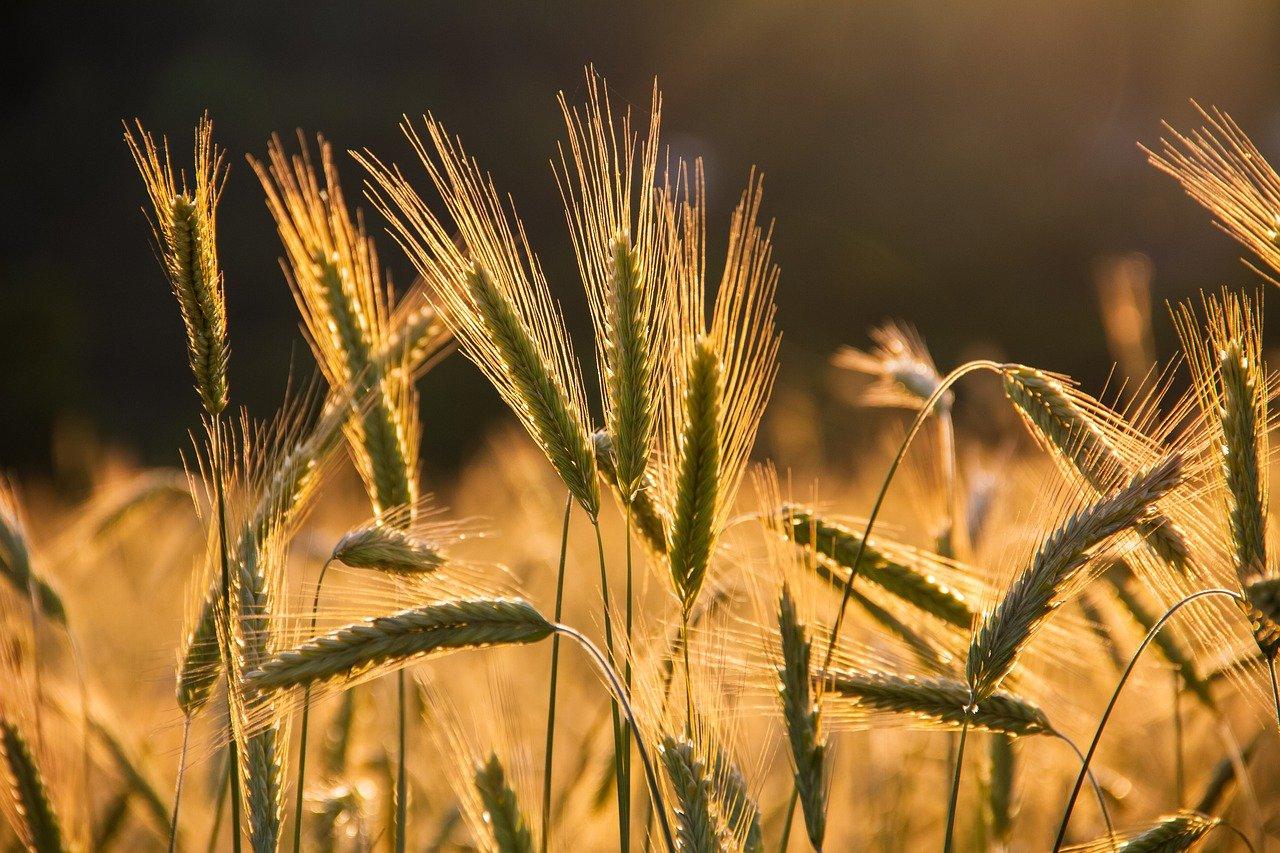 Rolnictwo na Uniwersytecie Przyrodniczym w Poznaniu